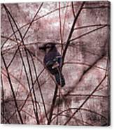 Blue Jay In The Willow Canvas Print