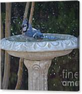 Blue Jay Loves To Splash Water Canvas Print