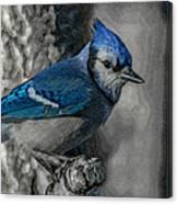 Blue Jay Painterly Canvas Print