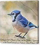 Blue Jay With Verse Canvas Print