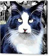 Blue Kitty Two Canvas Print