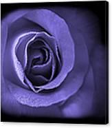 Blue Lavender Violet Roses Triptych Canvas Print