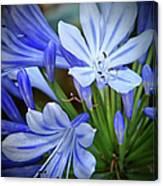 Blue Lilie Canvas Print