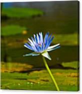 Blue Lily Canvas Print
