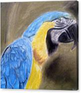 Blue Macaw Canvas Print