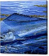 Blue Mahi Off0071 Canvas Print
