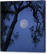 Blue Moon Horse And Oak Tree Canvas Print