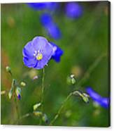 Blue Morning Flowers Canvas Print