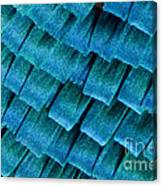 Blue Morpho Wing Scales Canvas Print