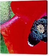 Blue Opium Canvas Print
