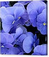 Blue Pansies Canvas Print