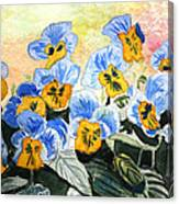 Blue Pansy Canvas Print