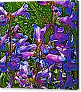 Blue Penstemon On Bald Mountain In Ketchum-idaho Canvas Print