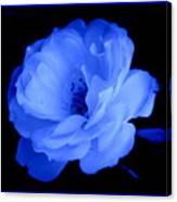 Blue Perfection Canvas Print