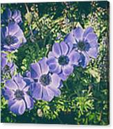 Blue Poppies Blooms Canvas Print