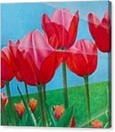 Blue Ray Tulips Canvas Print