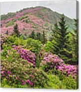 Blue Ridge Mountain Rhododendron - Roan Mountain Bloom Extravaganza Canvas Print