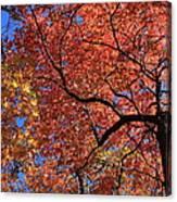 Blue Ridge Mountains Fall Foliage Canvas Print