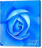 Blue Rose Macro Shot Canvas Print