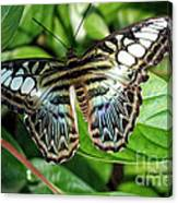 Blue Sea Butterfly Canvas Print