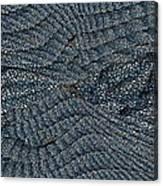 Blue Sheets Canvas Print
