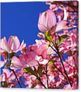 Blue Sky Art Prints Pink Dogwood Flowers Canvas Print