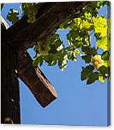 Blue Sky Grape Harvest - Thinking Of Fine Wine Canvas Print