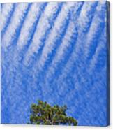 Blue Sky White Clouds Green Trees Canvas Print