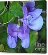 Blue Snail Vine Twins Canvas Print