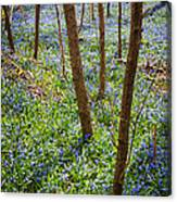 Blue Spring Flowers In Forest Canvas Print
