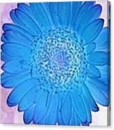 Blue Surprise Canvas Print