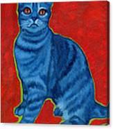 Blue Tabby Canvas Print