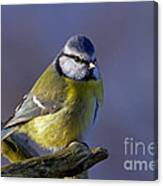 Blue Tit In The Blue Canvas Print
