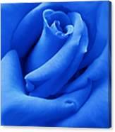 Blue Velvet Rose Flower Canvas Print
