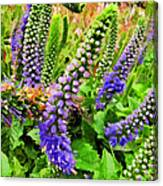 Blue Veronica Flowers   Digital Paint Canvas Print