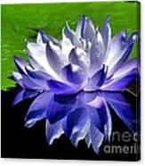 Blue Water Lily Reflection Canvas Print