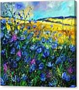 Blue Wild Chicorees Canvas Print