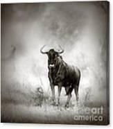 Blue Wildebeest In Rainstorm Canvas Print