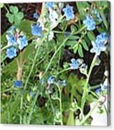 Blue Wildflowers Canvas Print