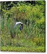 Blue Winged Heron 2013 Canvas Print