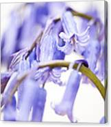 Bluebell Abstract II Canvas Print