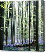 Bluebell Forrest 1 Canvas Print