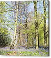 Bluebell Time In England Canvas Print