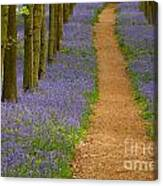 Bluebell Trail Canvas Print