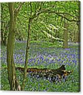 Bluebell Wood 1 Canvas Print