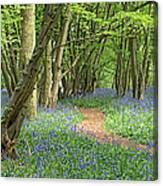 Bluebell Wood 3 Canvas Print
