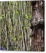 Bluebell Woodland Canvas Print