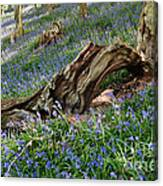 Bluebells At Bransdale Canvas Print