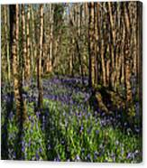 Bluebells In May Canvas Print