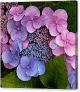 Blueberries And Cream Canvas Print